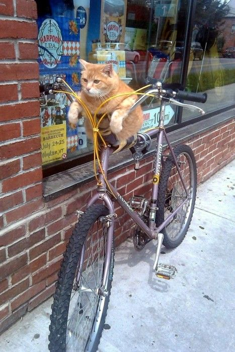 I have never seen a cat like this ;-))