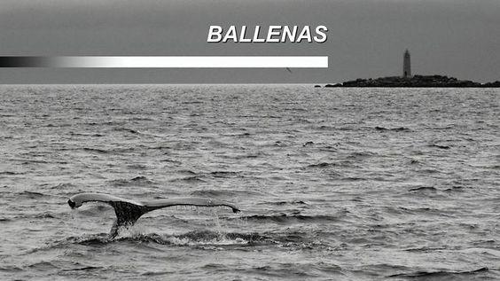 Avistamiento de #ballenas en #Islandia #Iceland