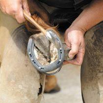 Palefrenier soigneur, vous prodiguerez tous les soins nécessaires aux chevaux : litière, pansage, nourriture.