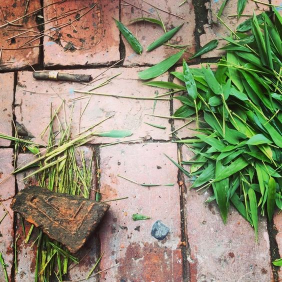 Mashing #bamboo stems and leaves to make natural dye. #naturesgifts