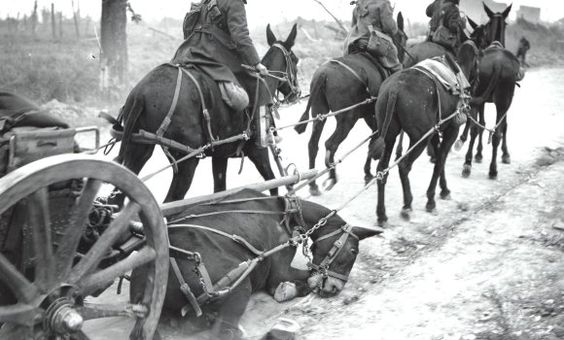 The horrors of war.  8 million horses dead in WWI alone.  Truly sad.