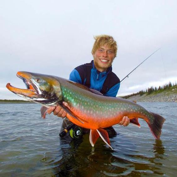 Fly fishing peter andreas christensen arctic char for Arctic char fish