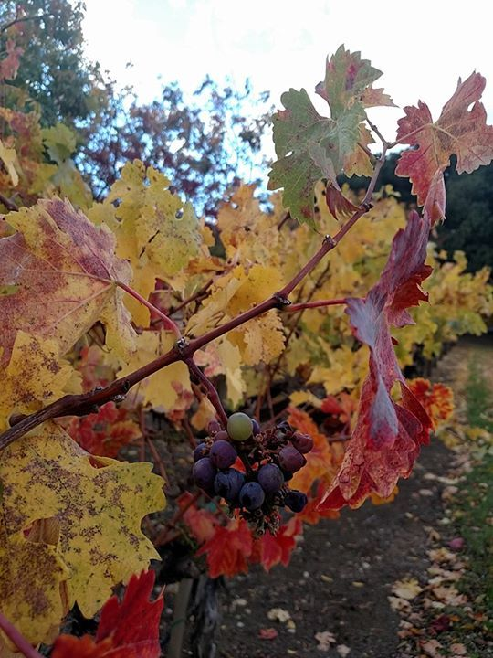 Fall at Hahn Estate & Tasting Room on the Santa Lucia Highlands