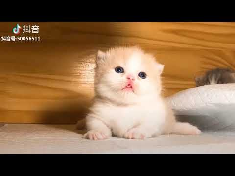 Tiktok Cat Tik Tok Funny Cat Cute Cat Videos Compilation 2019
