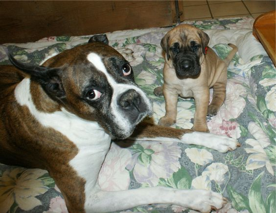 """This is my sweet Glory Bean...she is 11 years old and this is """"Peter"""" with her at 3 1/2 weeks old...He is Lois' son..."""
