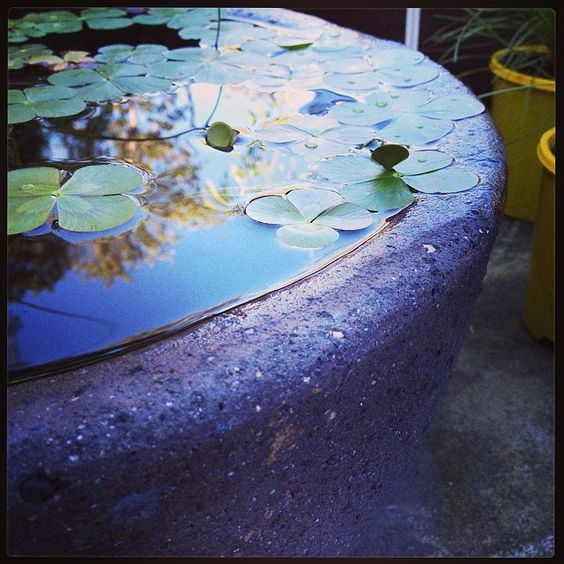 This is a photo my friend took at a garden centre - don't know where but its stunning - just like the one I want =)