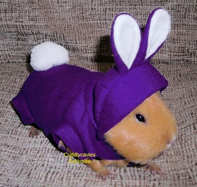 guinea pig clothes - Bing Images