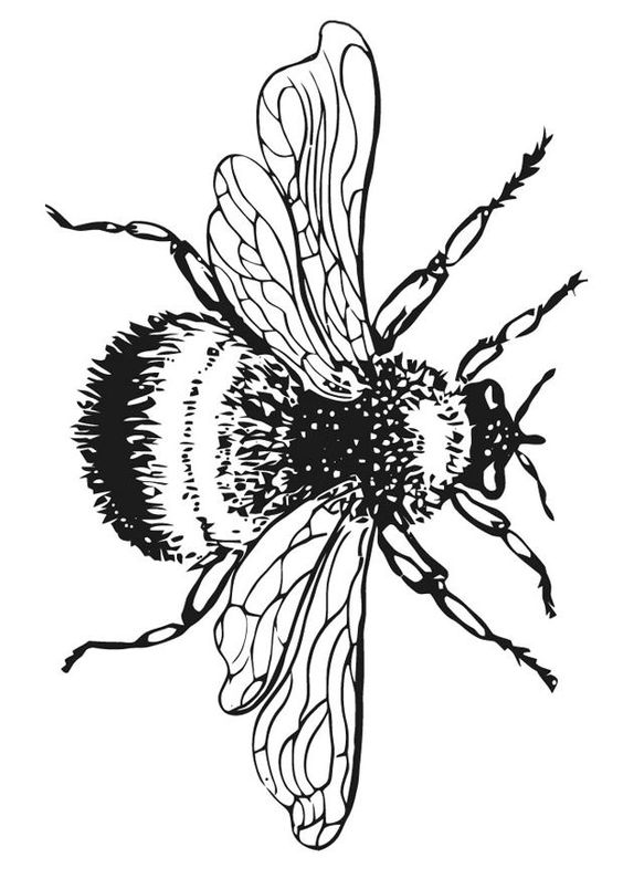 Line Art Bee : Bumble bee coloring pages pictures