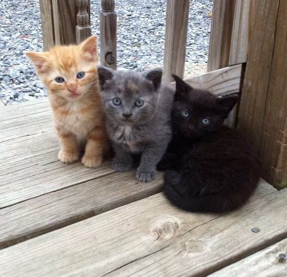 These fur babies remind me of my own: Butter, Smokey, & Ebony.