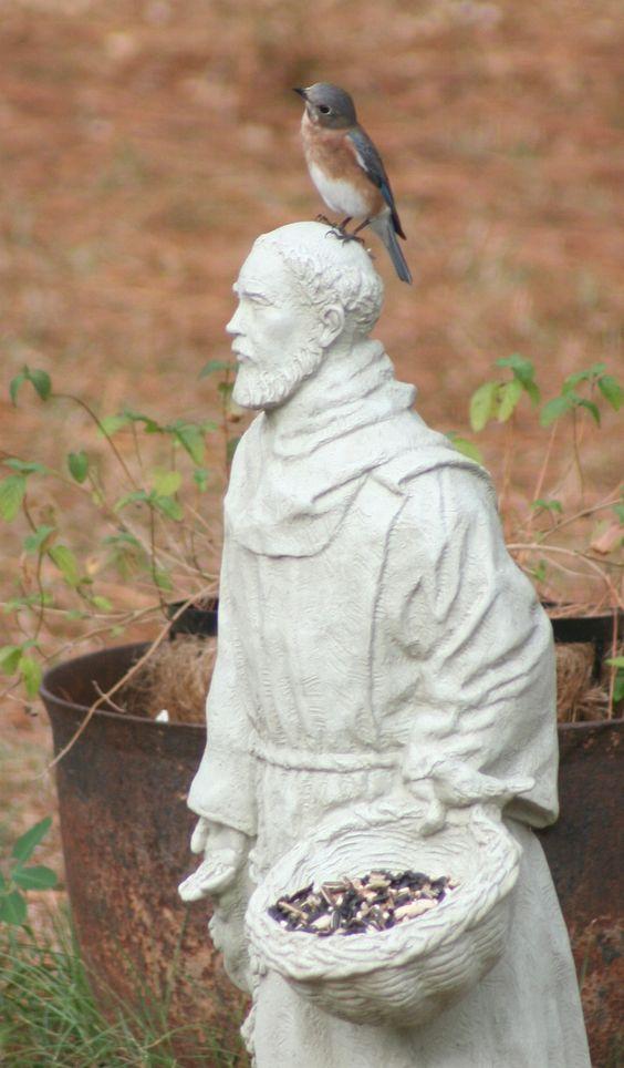 Eastern bluebird on St. Francis' head (c) GP