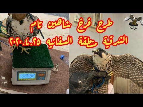طرح فرخ شاهين تام الشرقية منطقة السفانيه ٢٠٢٠ ٤ ٢٥ Youtube Falcon Hunting Broadway Shows The Creator