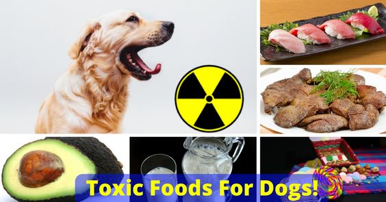 21 Highly Dangerous Foods For Dogs