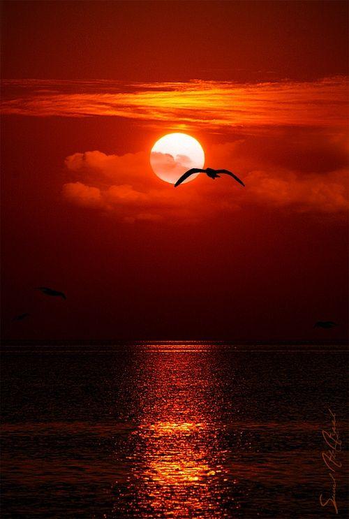 â•°♥â•® Sunset!:
