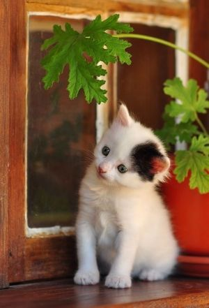 """Kittens believe all Nature is occupied with their diversion."" --Jules Champfleury"