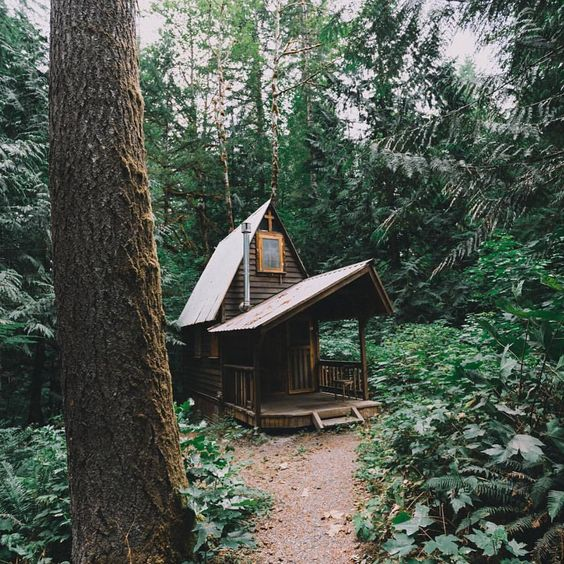 "Pacific Northwest Wonderland on Instagram: ""Life deep in the Washington woods  Photo by @chriskerksieck #pnwonderland"""
