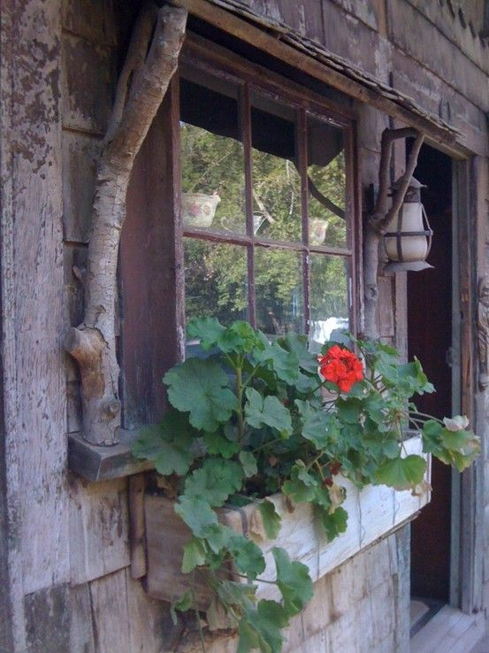 I love the tree branches holding up the top window shelf - Rustic window box of geraniums on mountain cabin: