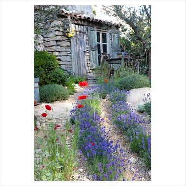 GAP Photos - Garden & Plant Picture Library - Lavender and poppies lining pathway to rustic shed - GAP Photos - Specialising in horticultural photography