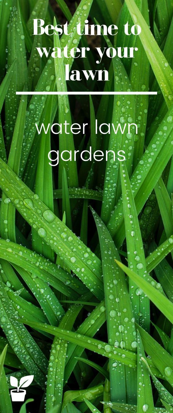 Best Time To Water Your Lawn Watering Tips Home