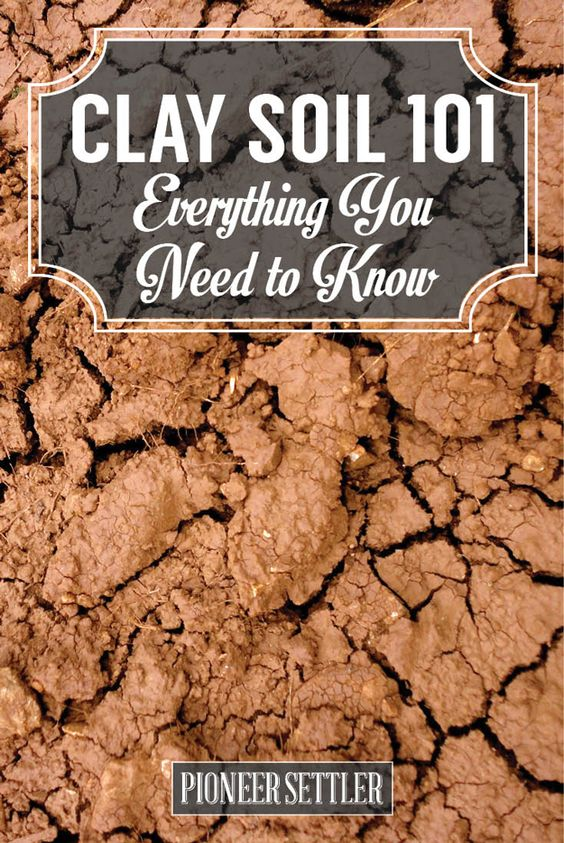 How To Amend Clay Soil Clay Gardening And Ideas