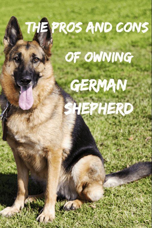 German Shepherd Pup I Would Love To Have A German Shepherd
