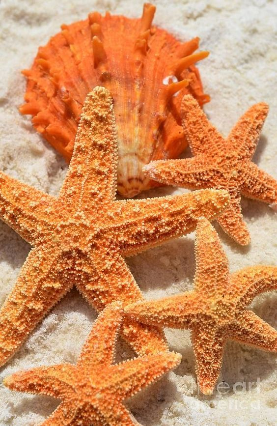 .loving. These. Starfish.  In the. Caribbean