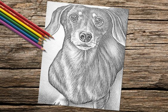 Wouldn't this adorable Dachshund be so fun to color? Hand drawn in classic grayscale, this coloring page is the perfect way to relax, stay creative and even hone your artistic skill! See more printable coloring pages @ ArtistryByLisaMarie.Etsy.com