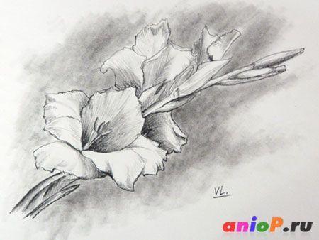 нарисованные цветы фото карандашом