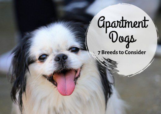 7 Best Small Dog Breeds For An Apartment