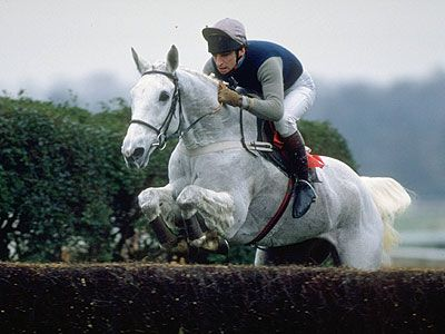 Race Horse Desert Orchid. Whenever I see archive of him running ,i still get a lump in my throat,and tear in my eye, he was such a fighter.