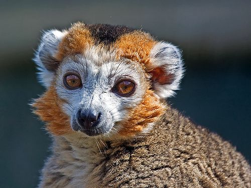 Animals that live in the deciduous forest - photo#51