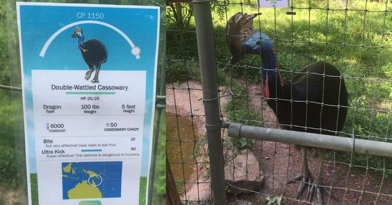 Zookeeper Can't Take It Anymore, Decides To Add Pokemon Go Signs Next To Animals | Bored Panda