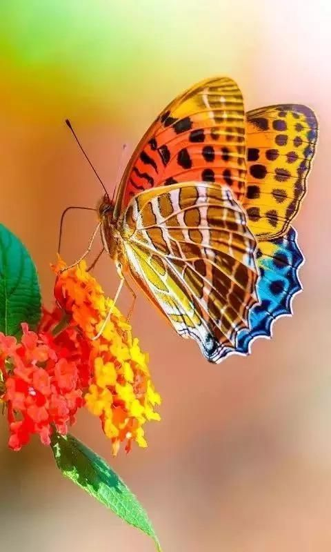 Sitting Pretty Wildlife Photos Pictures Nature Beautiful Butterflies Butterfly Pictures Most Beautiful Butterfly