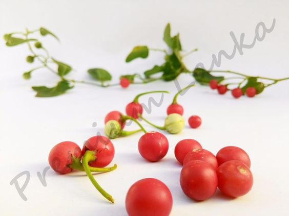 1000 Seeds Amaranthus gangeticus Chinese Edible Red Vegetable Organic No Gmo