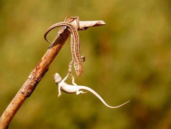 amazing-animal-pictures-24