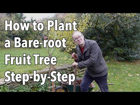 Bare Root Trees Are Much Less Expensive Than Pot Grown Plants And Are Available Between Autumn And Spring While The Plants A Fruit Trees Plants Trees To Plant