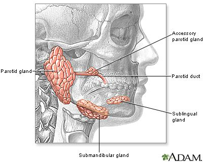 Glands in bottom of mouth