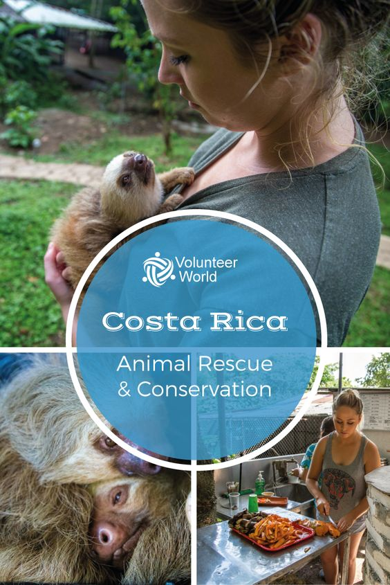 Volunteer in Costa Rica to conserve the country's incredible biodiversity and help promote the success of its rescue wildlife centers!