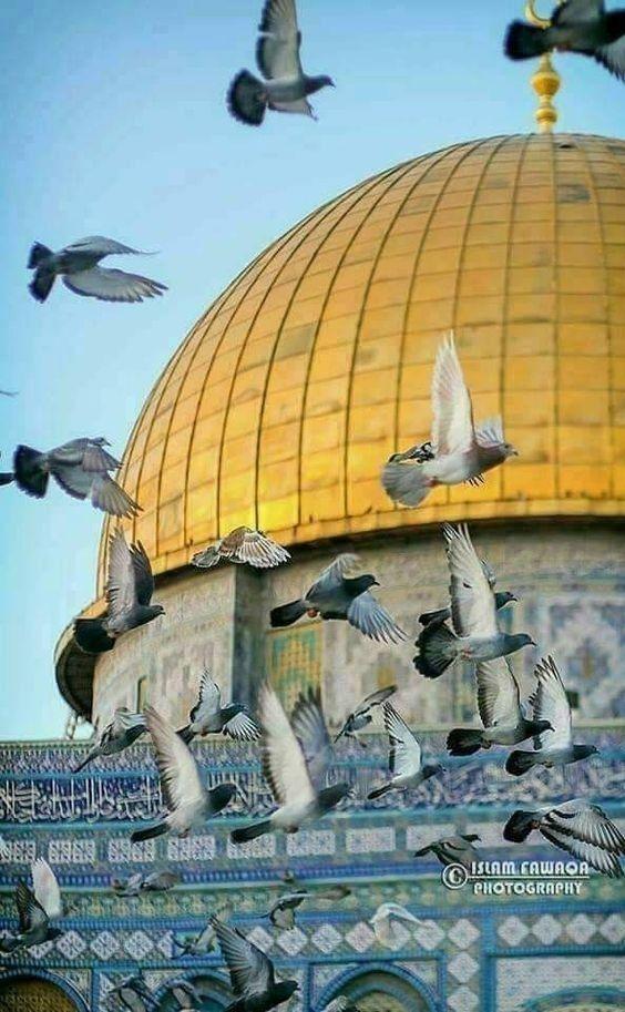حكاوينا V O Karbala Photography Mosque Art Islamic Pictures