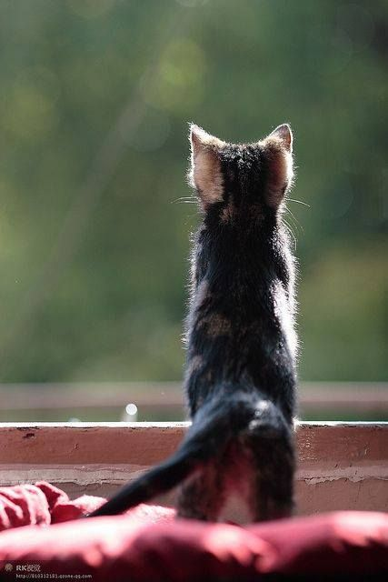 Dear God, you have given us care over all living things; protect and bless the animals who give us companionship and delight, make us their true friends and worthy companions. Amen.