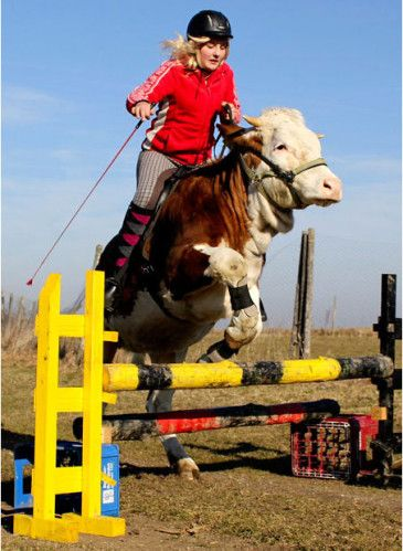 Il était une fois Régina Mayer, une jeune bavaroise passionnée de saut d'obstacle, ses parents ne pouvant pas lui acheter un cheval, celle-ci a eu l'idée de dresser une vache au saut d'obstacle et ça marche!