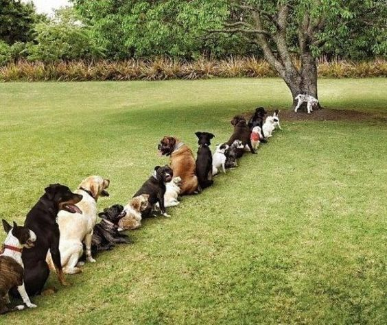 Dogs wait their turn patiently. But from the length of the queue it must be a female line.