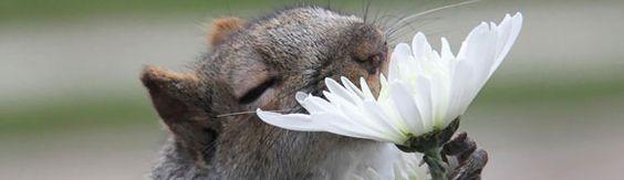Squirrel Appreciation Day is Real
