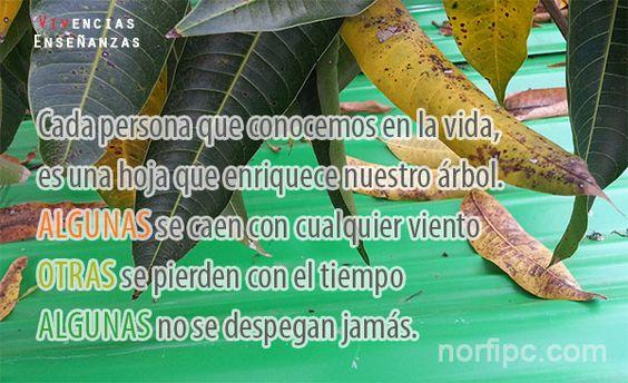 Cada persona que conocemos en la vida, es una hoja que enriquece nuestro árbol…