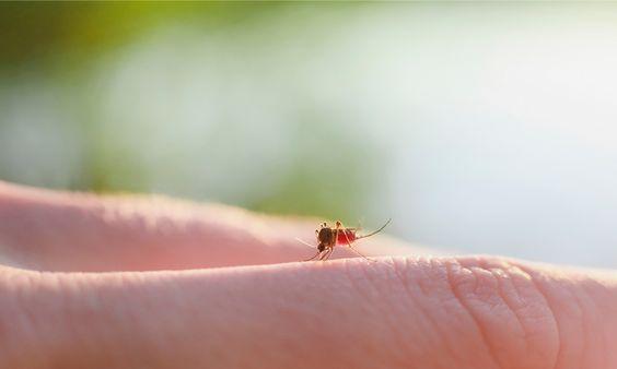 Zo kom je sneller van je muggenbulten af - Libelle Daily