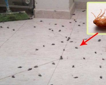 insecticida-casero
