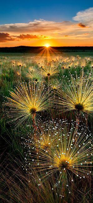 孔雀の羽のような花が綺麗で美しい花畑