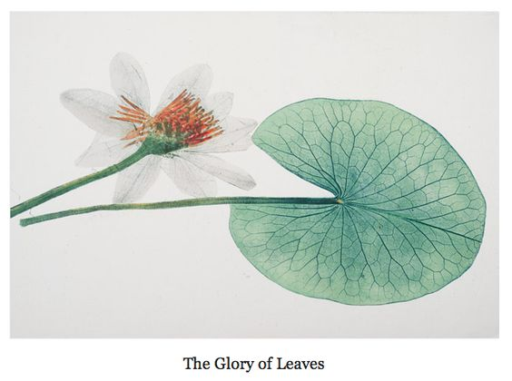 The glory of leaves from National Geographic.