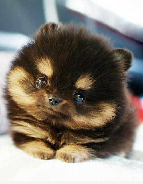 .: Adorable Animals, So Cute, Adorableanimals, Cute Animals, Baby Animals, Gonna