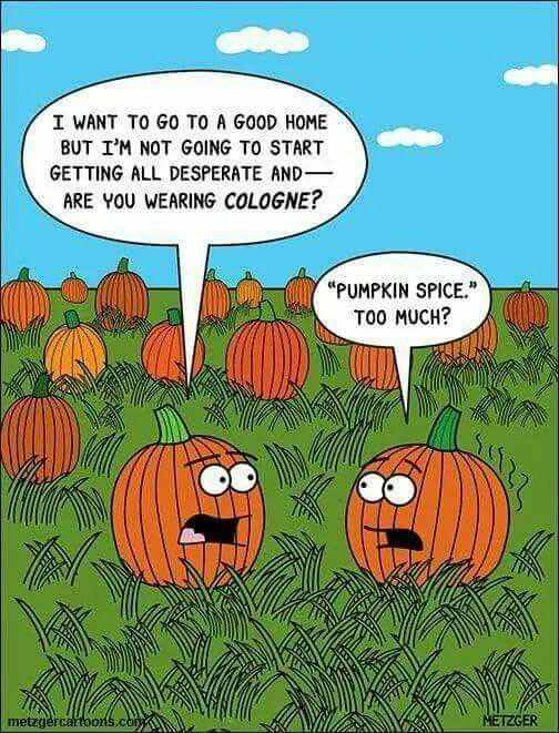 Too Much Pumpkin Spice Halloween Jokes Holiday Cartoon Holiday Humor