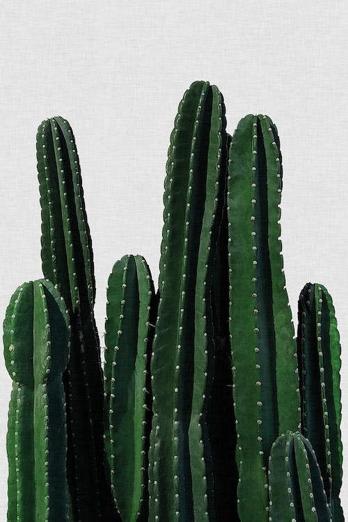 Cactus I Art Print By Orara Studio Cactus Poster Cactus Art